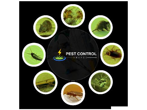 Pest Control Amaroo