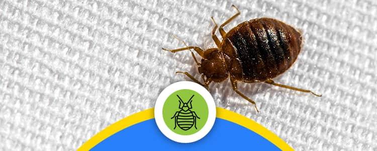 Bed Bug Control Amaroo