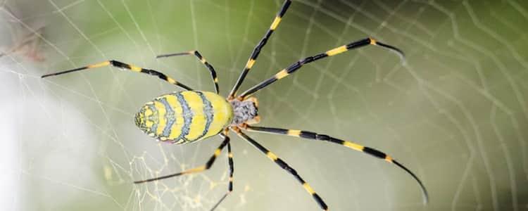 Spider Control Amaroo